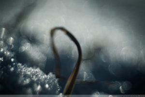 Winter, Kalletal, Schnee, Eis, Schneekristall, Eiskristall, Winterimpressionen