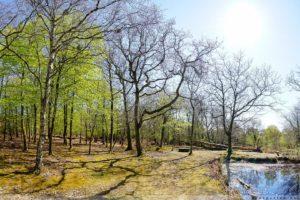 Fanö, Dänemark, Geocachen, Urlaub, Park, Fano Bad
