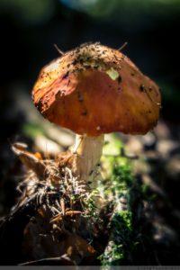 Fliegenpilz, Natur, Fotografie