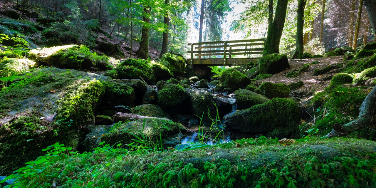 Geocaching: Unterwegs im Silberbachtal