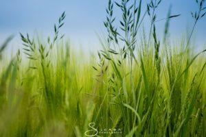 Umwelt, Natur, Naturschutz, Umweltschutz, Nachhaltigkeit