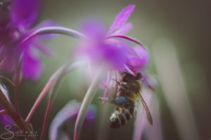 Umwelt, Natur, Naturschutz, Umweltschutz, Nachhaltigkeit, Bienen